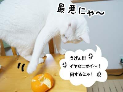 cat883