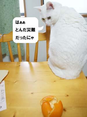 cat885
