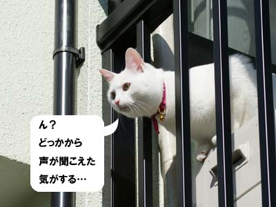 cat888
