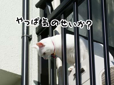 cat889