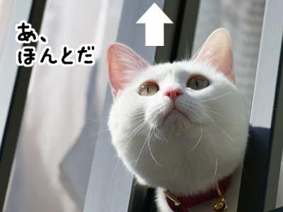 cat890