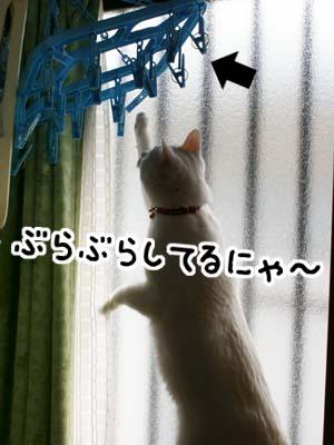 cat894