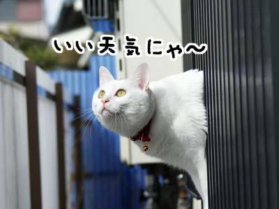 cat898