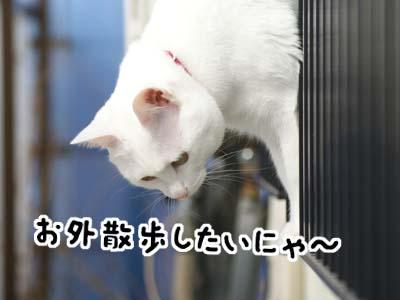 cat900