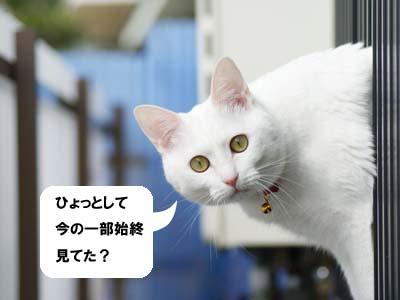 cat902