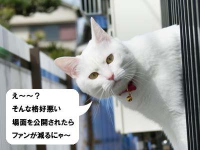 cat903