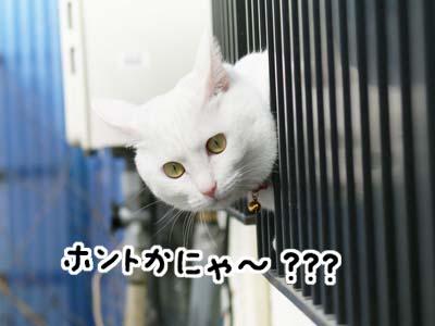 cat904