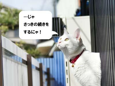 cat905