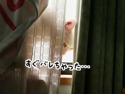 cat907