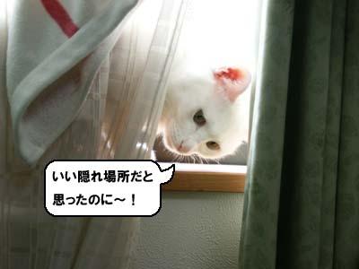 cat908