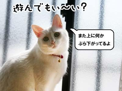cat911