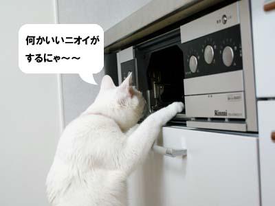 cat914