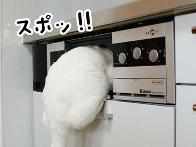 cat915