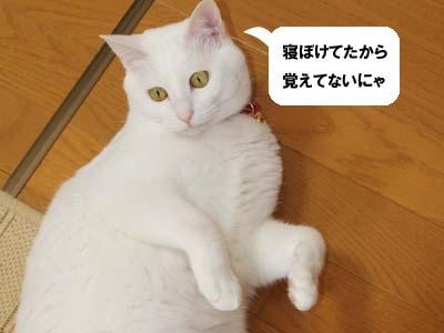 cat916