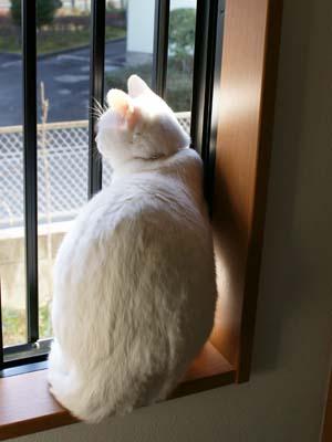 cat917