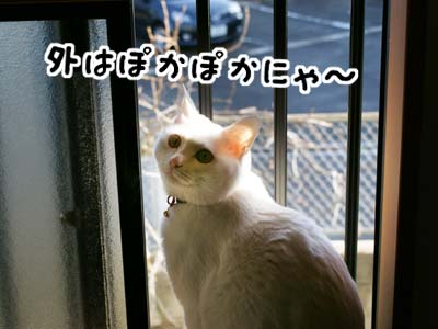 cat918