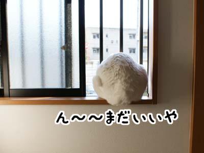 cat920