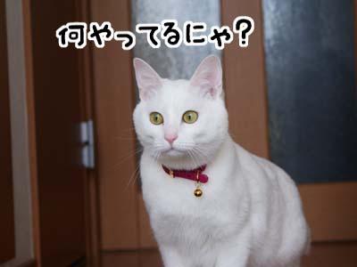 cat922