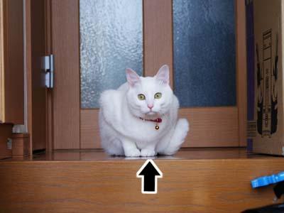 cat923