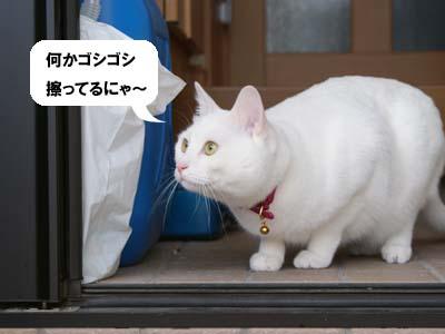 cat925