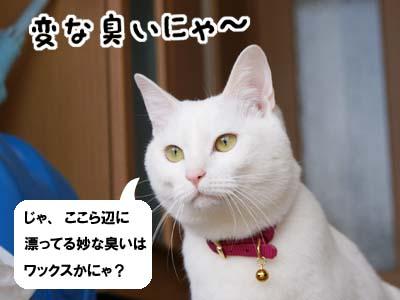 cat927