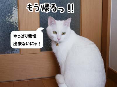 cat928