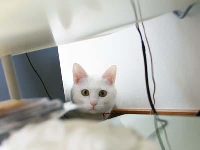 cat930