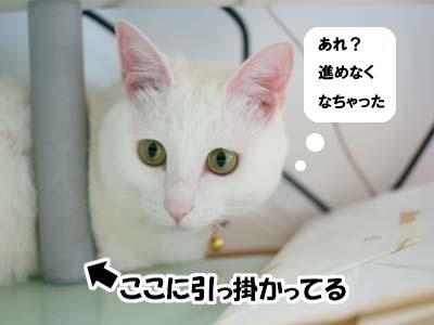 cat932