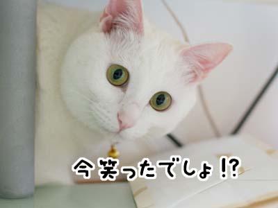 cat933