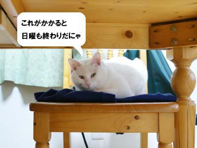 cat934