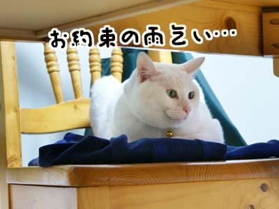 cat936