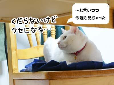 cat937
