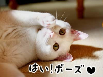 cat939