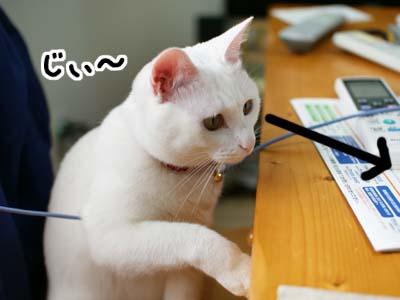 cat941