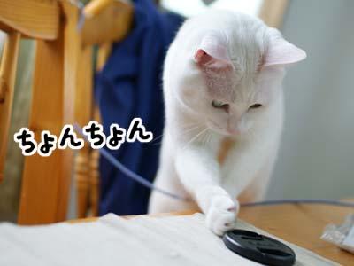 cat943