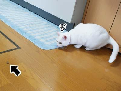 cat946