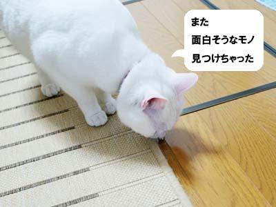 cat947