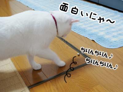 cat949