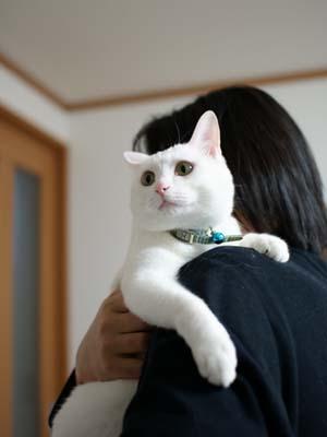 cat958