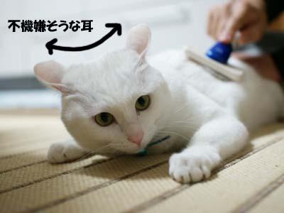 cat961