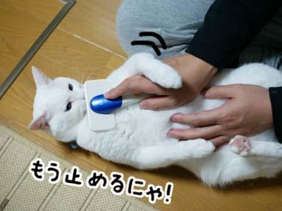 cat962