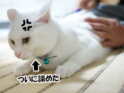 cat963