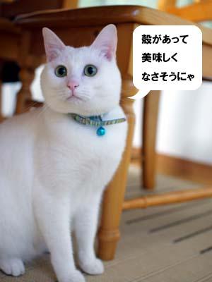 cat969