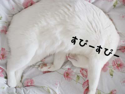 cat970