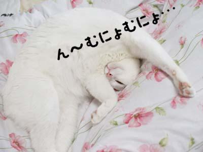 cat971