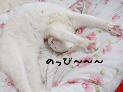 cat972