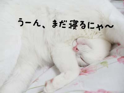 cat973