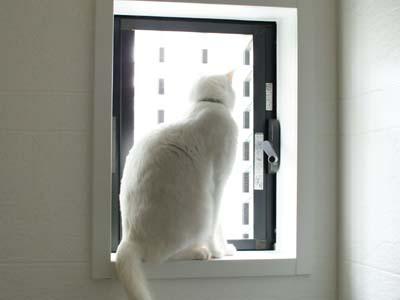 cat976