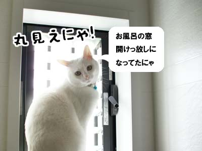cat977