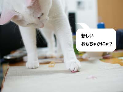 cat982